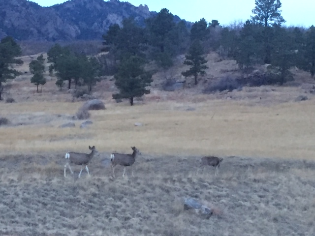 Deer at Cheyenne Mountain